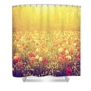 Colorful Tulip Flowers In The Garden On Sunny Day In Spring Shower Curtain