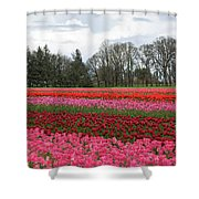 Colorful Tulips Blooming At Tulip Festival Shower Curtain
