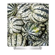 Colorful Winter Acorn Squash On Display Shower Curtain