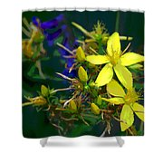 Colorful Wonder Shower Curtain