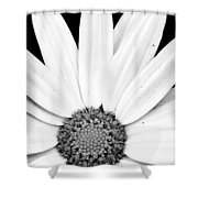Colorless Shower Curtain