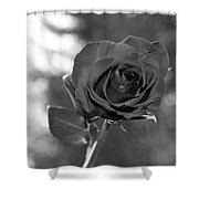 Colorless Rose Shower Curtain