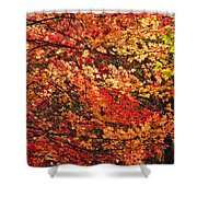 Colors Blowing In The Wind Shower Curtain by Lori Frisch