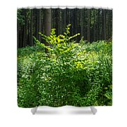 Colors Of A Forest In Vogelsberg Shower Curtain