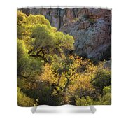 Colors Of Autumn In The Sonoran  Shower Curtain