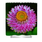 Colors Of Nature - Grand Opening 001 Shower Curtain