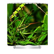 Colors Of Nature - Green Katydid 001 Shower Curtain