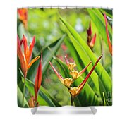 Colors Of The Tropics Shower Curtain
