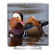 Colourful Duck Shower Curtain