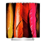 Colourful Feather Art Shower Curtain