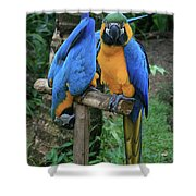 Colourful Macaw Pohakumoa Maui Hawaii Shower Curtain