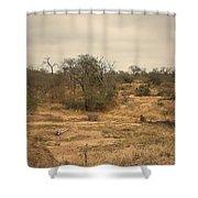 Colourful Safari Shower Curtain