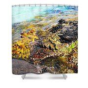 Colourful Sea Life - Fishers Point Shower Curtain