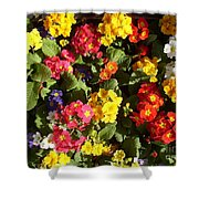 Colourful Spring Flowers Shower Curtain