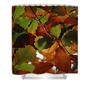 Colours Of Fall II Shower Curtain