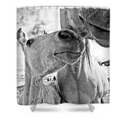 Colt 003 Shower Curtain