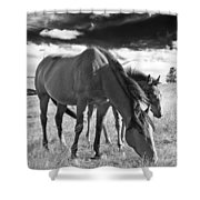 Colt 013 Shower Curtain