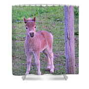 Colt Pony Shower Curtain