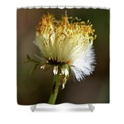 Coltsfoot Bad Hair Day 1 Shower Curtain