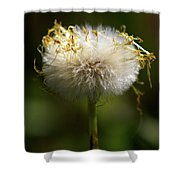 Coltsfoot Bad Hair Day 3 Shower Curtain