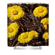 Coltsfoot Ring Shower Curtain