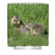 Columbian Ground Squirrels Shower Curtain