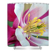 Columbine Flower 2 Shower Curtain