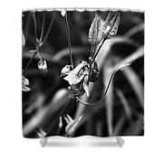 Columbine Flower 2 Black And White Shower Curtain