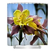 Columbine Flower Shower Curtain