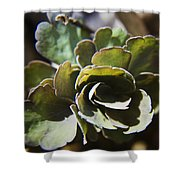 Columbine Foliage Shower Curtain