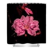 Columnar Ornamental Peach 001 Shower Curtain