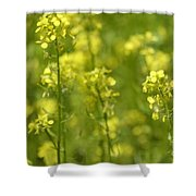 Colza Shower Curtain by Issabild -