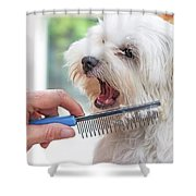 Combing Beards Of The White Dog Shower Curtain