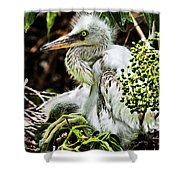 Come On Feathers Shower Curtain