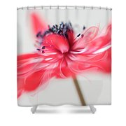Comes With A Bow. Shower Curtain