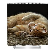 Comfy Cat Shower Curtain