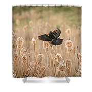 ...coming Home Shower Curtain