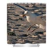 Coming In For A Landing - Jersey Shore Shower Curtain