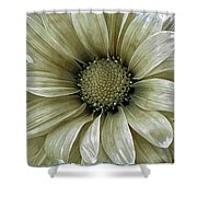Coming Up Daisies 2 Shower Curtain