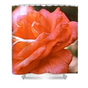Coming Up Roses Shower Curtain