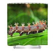 Comma Caterpillar Shower Curtain