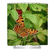Comma Shower Curtain
