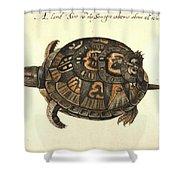 Common Box Tortoise, 1585 Shower Curtain