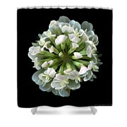 Common Clover Shower Curtain