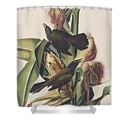 Common Crow Shower Curtain