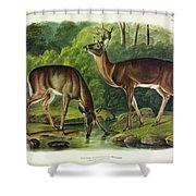 Common Deer Shower Curtain