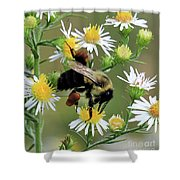 Common Eastern Bumblebee  Shower Curtain