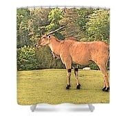 Common Eland Shower Curtain