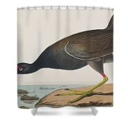 Common Gallinule Shower Curtain
