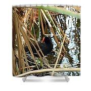 Common Gallinule Shower Curtain